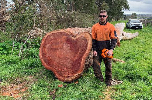 tree removals lopping stump grinding adelaide